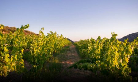 Wines of mértola: The excellence that surprises!