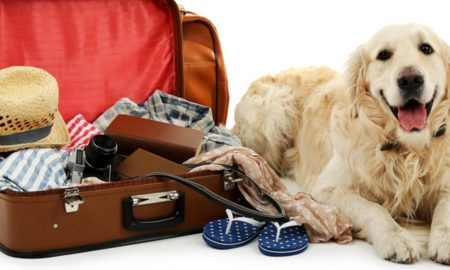Traveling with pets?